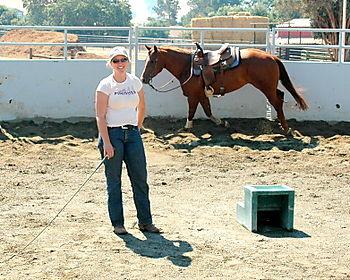 Horses 001