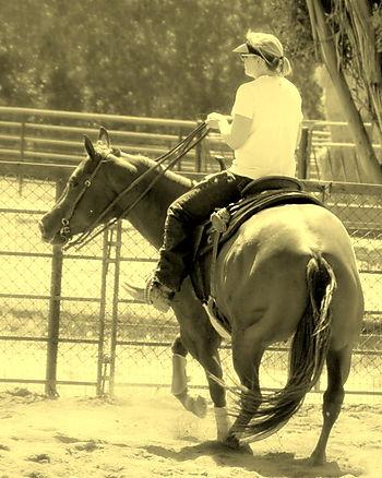 Horses 093