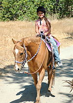 Horses 007
