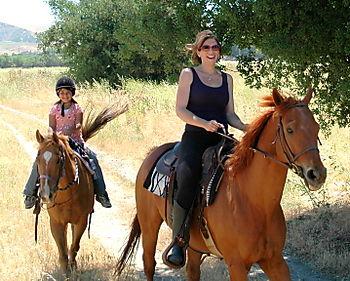 Horses 059