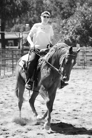 Horses 020-2