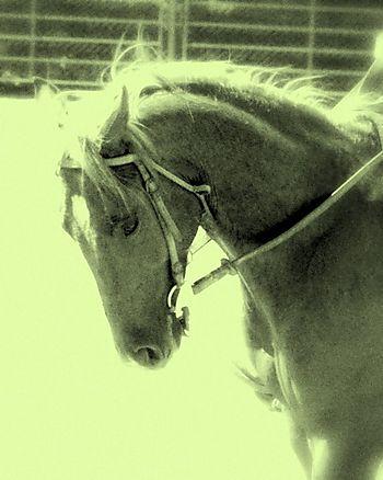 Horses 046-2