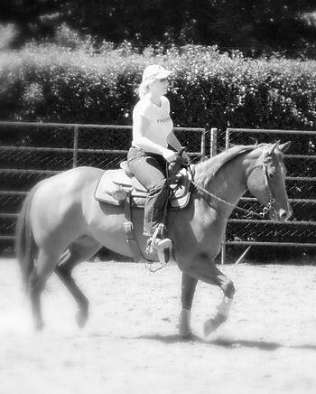 Horses 010-3