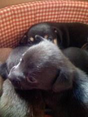Puppies_005