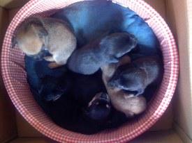 Puppies_018