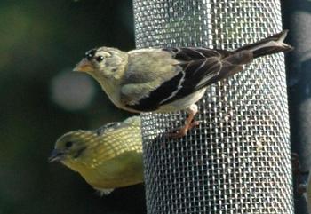 Peckandpecker